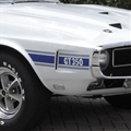 69-70 Blue Shelby GT350 Stripe Kit